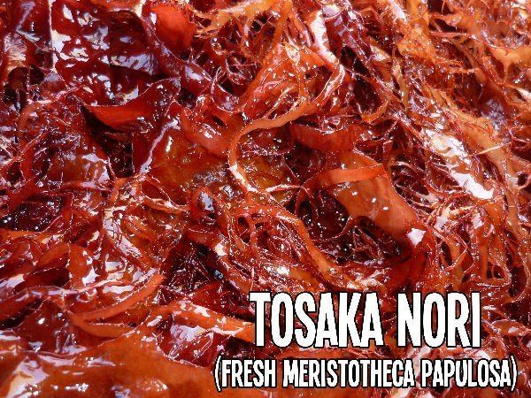 Meristotheca papulosa Tosaka Seaweed Tosaka Seaweed Suppliers and Manufacturers at