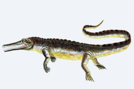 Mesosaurus Mesosaurus Facts information about the extinct prehistoric animal