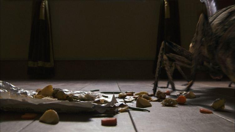 Metamorphosis (2012 film) Franz Kafka Metamorphosis Movie Metamorphosisonfilmcom