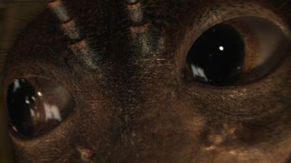 Metamorphosis (2012 film) BMovie Celebration Metamorphosis Undead Backbrain