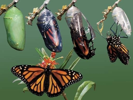 Metamorphosis Metamorphosis Counseling amp Consulting LLC Our Mission