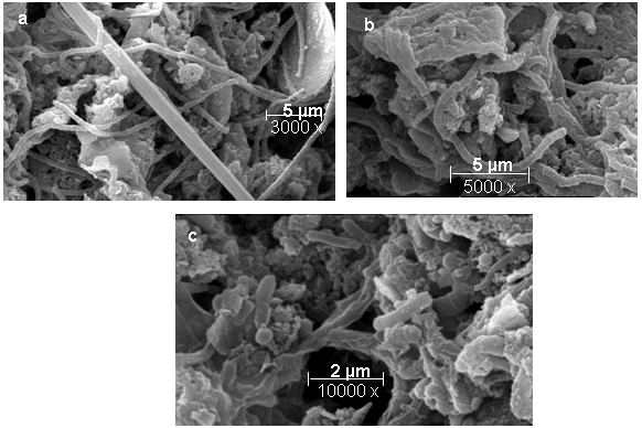 Methanosaeta Figure 8 PCRbased DGGE and FISH analysis of methanogens in an