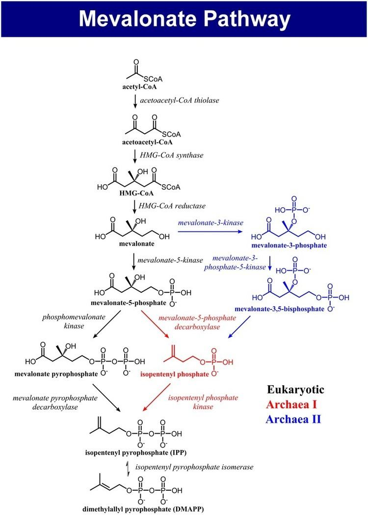 Mevalonate pathway