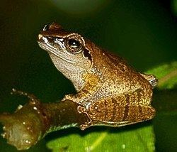 Mhadei Wildlife Sanctuary httpsuploadwikimediaorgwikipediacommonsthu