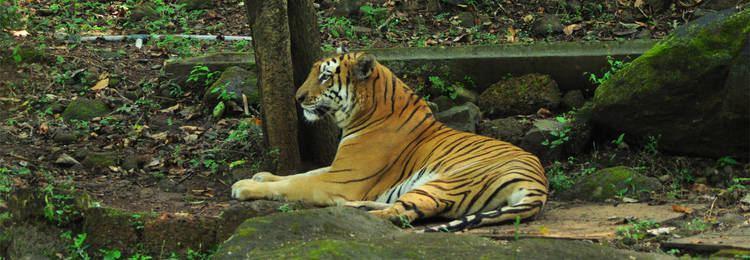 Mhadei Wildlife Sanctuary Goa Tourism Mhadei Wildlife Sanctuary