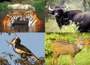 Mhadei Wildlife Sanctuary Mhadei Wildlife Sanctuary Sattari North Goa Wildlife Sanctuary in