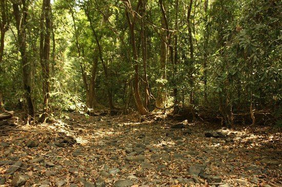 Mhadei Wildlife Sanctuary Mhadei Wildlife Sanctuary Sanguem Top Tips Before You Go