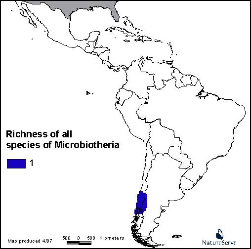 Microbiotheria infonaturanatureserveorgmapsgroupsnotlimited