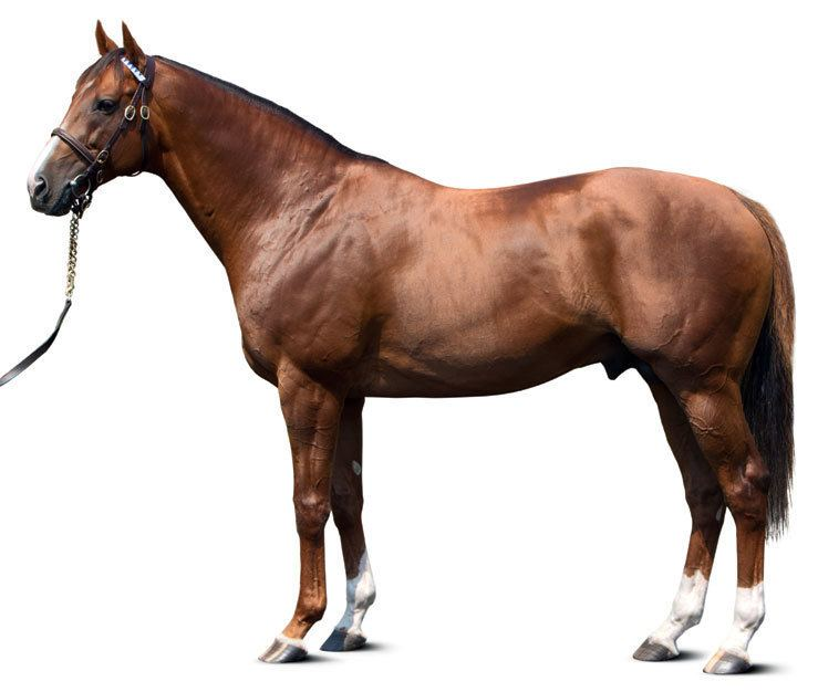 Midshipman (horse) httpsdarleycplnetdnasslcomsitesdefaultfi