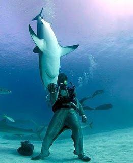 Mike Rutzen Michael Rutzen dives with sharks a pretty extreme