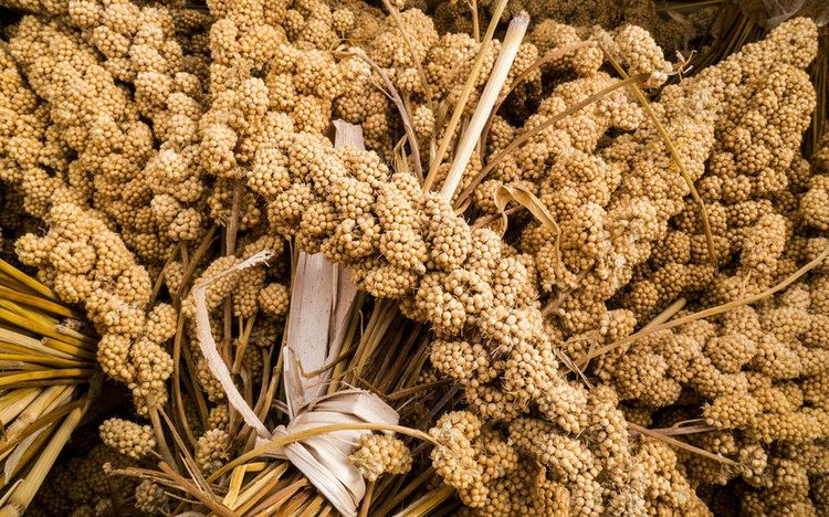 Millet Millet How A Trendy Ancient Grain Turned Nomads Into Farmers The