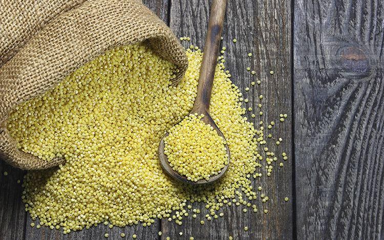 Millet Millet A GlutenFree Grain You Should Avoid