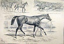 Minting (horse) httpsuploadwikimediaorgwikipediacommonsthu