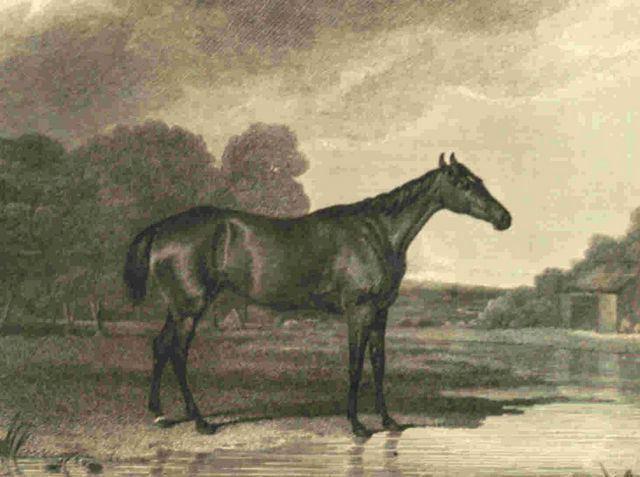 Minuet (horse)