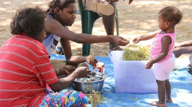 Minyerri, Northern Territory Traditional bush medicine finds new life as Gulbarn tea ABC News