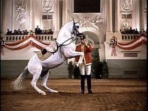 Miracle of the White Stallions Miracle of the White Stallions DVD Review