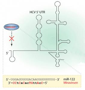 Miravirsen Treating hepatitis C by blocking a cellular microRNA