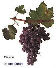 Mission (grape) wwwwineprosorgimagescontentgwgmissionjpg