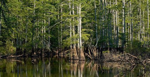 Mississippi Alluvial Plain Mississippi Alluvial Plain The Nature Conservancy
