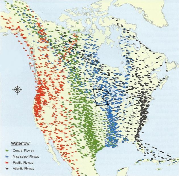 Mississippi Flyway Millions of migrant birds come to Minnesota via Mississippi flyway