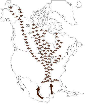 Mississippi Flyway TPWD Migratory Flyways of North America Mississippi Flyway