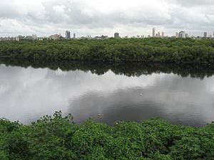 Mithi River httpsuploadwikimediaorgwikipediacommonsthu