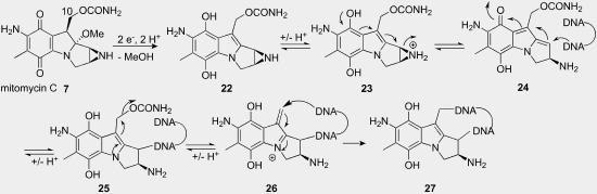 Mitomycins Mitomycins syntheses a recent update