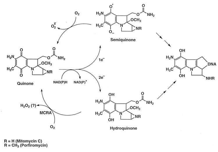 Mitomycins Mitomycin resistance in mammalian cells expressing the bacterial