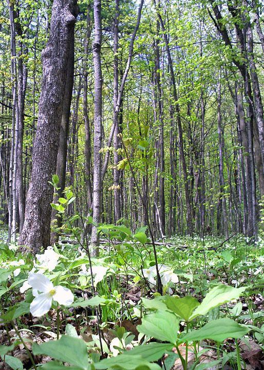 Mixed Wood Plains Ecozone (CEC)