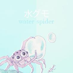 Mizugumo Monmon water spider monmon Tumblr