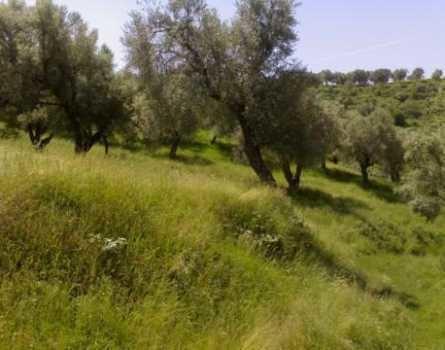 Mjull Bathore albanianpropertycomwpcontentuploadslandfor