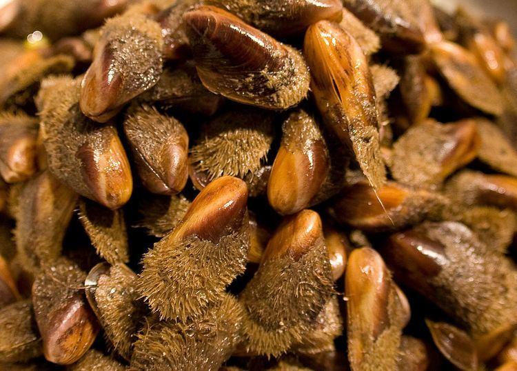 Modiolus (genus)
