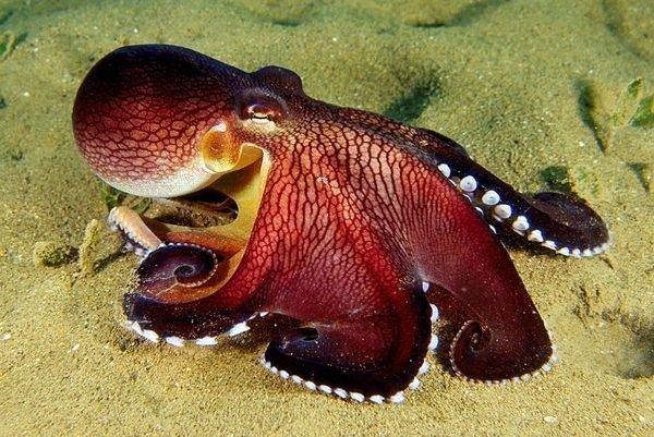 Mollusca Mollusca Animal Phylums