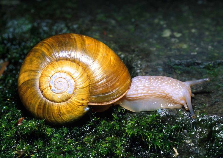 Mollusca 1000 images about Phylum Mollusca on Pinterest What39s the
