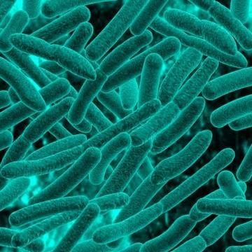 Monera imagestutorvistacomcmsimages101bacteria1jpg