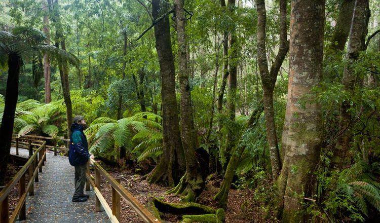 Monga National Park wwwnationalparksnswgovaumedia99A6A666011C4