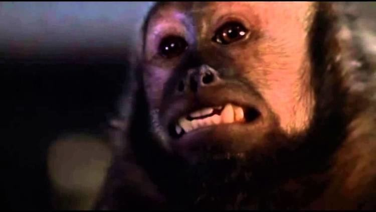 Monkey Shines Monkey Shines Monkey Death Scene YouTube