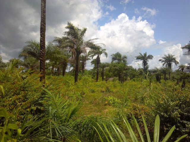 Monrovia Beautiful Landscapes of Monrovia