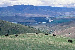Montana Valley and Foothill grasslands httpsuploadwikimediaorgwikipediacommonsthu