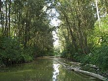 Montone (river) httpsuploadwikimediaorgwikipediacommonsthu