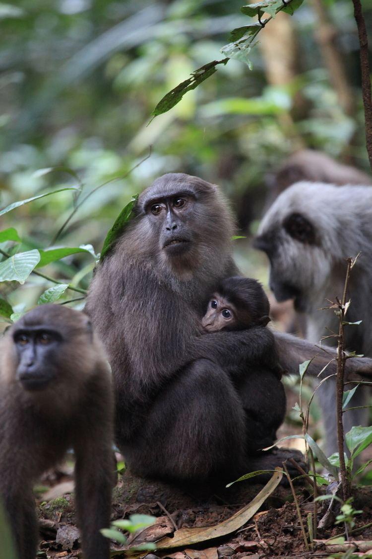 Moor macaque About Erin P Riley PhD