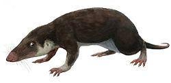 Morganucodon httpsuploadwikimediaorgwikipediacommonsthu