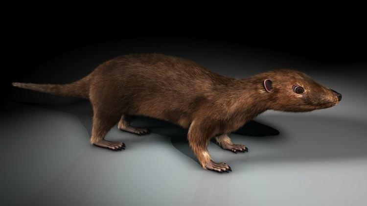 Morganucodon Morganucodon by spookysd 3D Modeling Animals