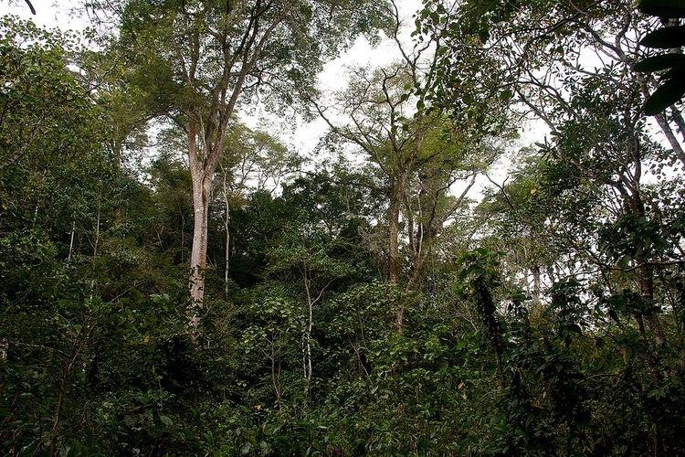 Moribane Forest Reserve