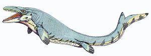 Mosasaurinae httpsuploadwikimediaorgwikipediacommonsthu