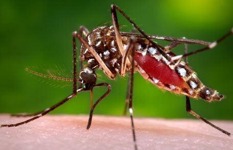 Mosquito Avoid Mosquito Bites Features CDC