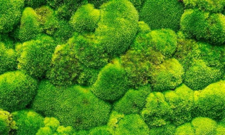Moss Moss walls the newest trend in biophilic interiors Inhabitat