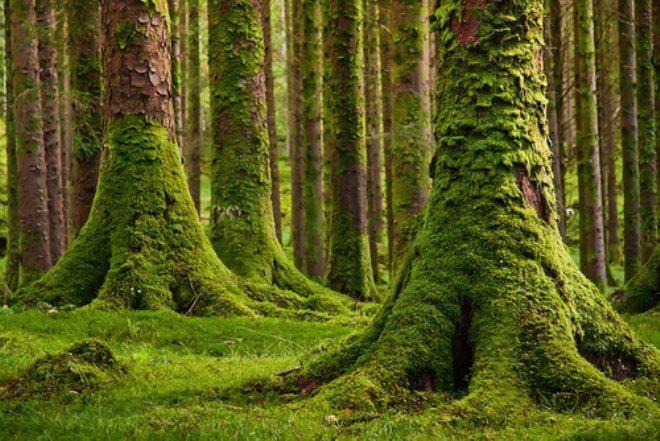 Moss Moss Art Nifty Homestead