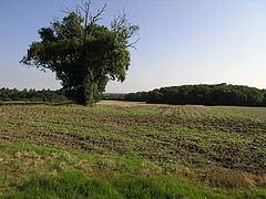 Muckton httpsuploadwikimediaorgwikipediacommonsthu