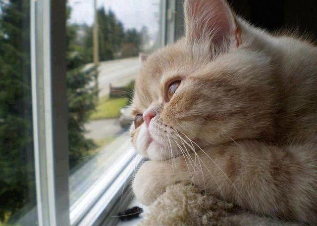 Muezza The Prophet Muhammad39s sawfavourite cat Muezza Ayse Koc
